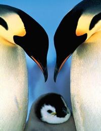 La forza dei pinguini