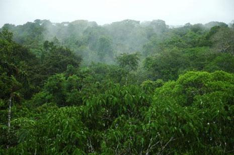 La foresta amazzonica non teme il caldo