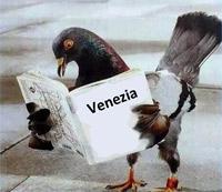 I piccioni di piazza San Marco