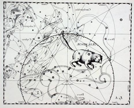 L'Orsa Minore secondo Hevelius