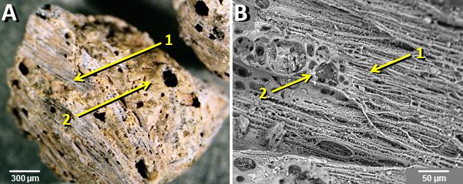 materiale siliceo fuso causato da impatti cosmici