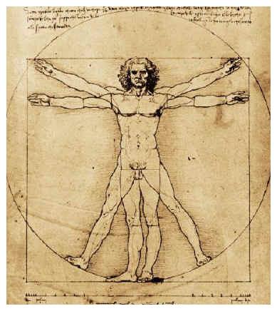 Simmetria del corpo umano