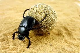 lo scarabeo dello sterco