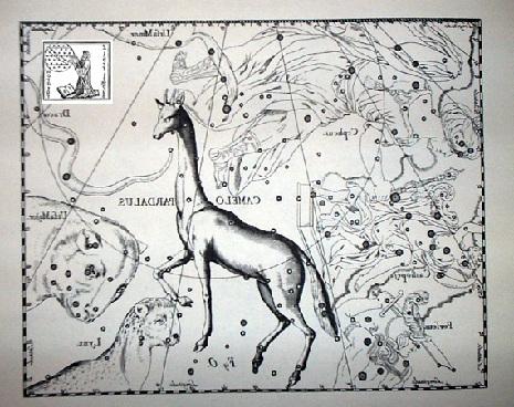 la Giraffa secondo Hevelius