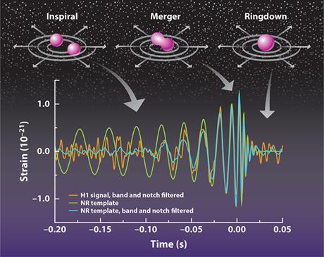 Schema della forma del segnale delle onde gravitazionali rilevato da LIGO confrontata con le diverse fasi del processo di fusione dei buchi neri che le hanno generate (Credit: Frans Pretorius, APS/Carin Cain)