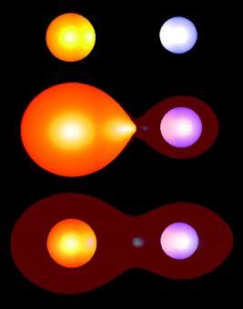 Rappresentazione schematica dell'evoluzione di un sistema binario di stelle fino ala fase (in basso) di inviluppo comune. Crediti. Adrian Potter