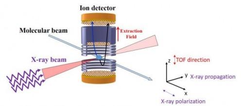 """Schema del set-up sperimentale. Il fascio di raggi X interseca un fascio molecolare all'interno di uno spettrometro, che misura tutte e tre le componenti del moto dell'impulso ionico. TOF sta per Time of flight, ovvero tempo di """"volo"""", o spostamento, dello ione. Crediti: Rudenko et al. 2017"""